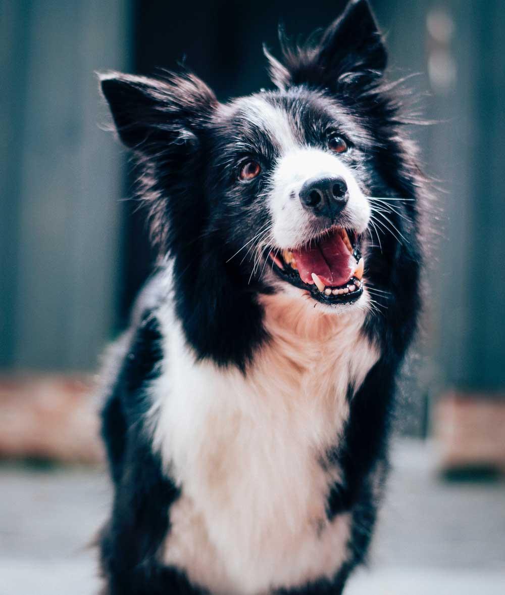 caninecompanion-contact-us